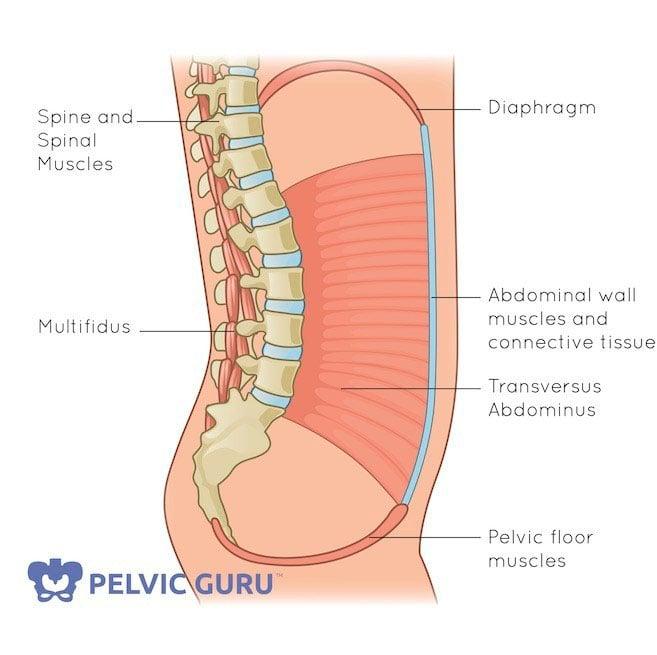 Deep core muscles: Diaphragm, Pelvic Floor, Innermost Abs and Multifidus