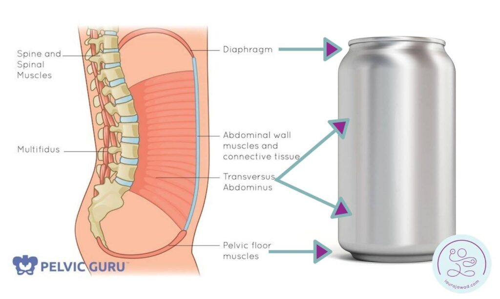 Diagram of inner core muscles showing parallels with a soda can.